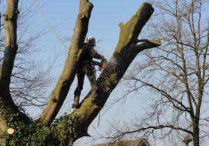 Kappen boom door boomspecialist